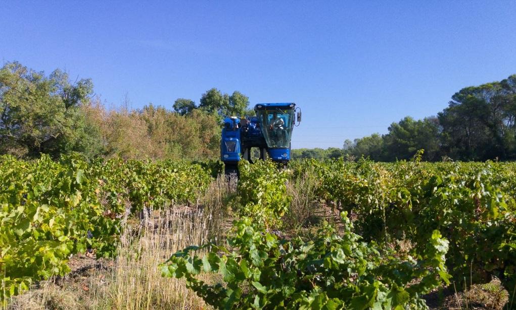 Kaalslag in de wijngaard