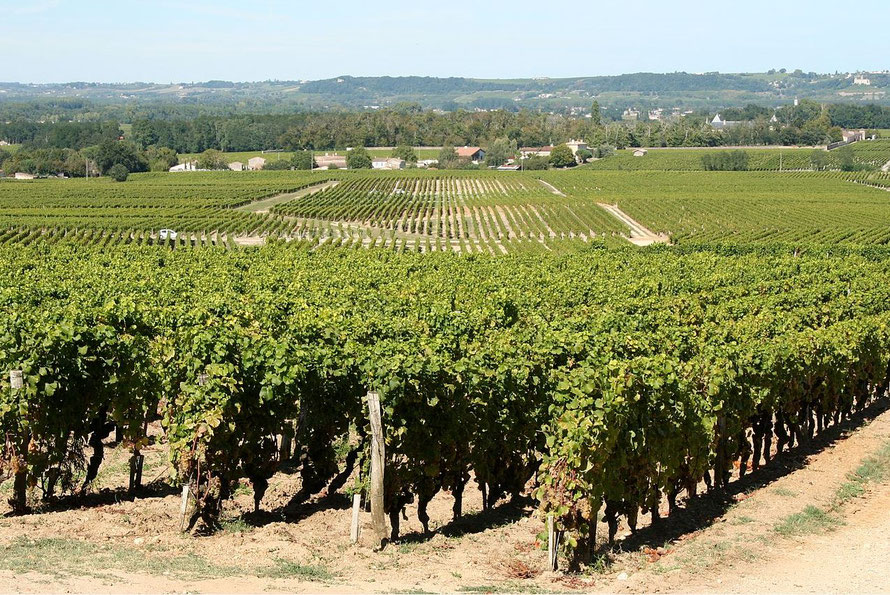 Bordeaux en primeur: een lappendeken