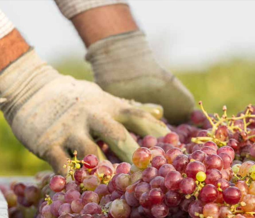 Drink wijn voor het klimaat