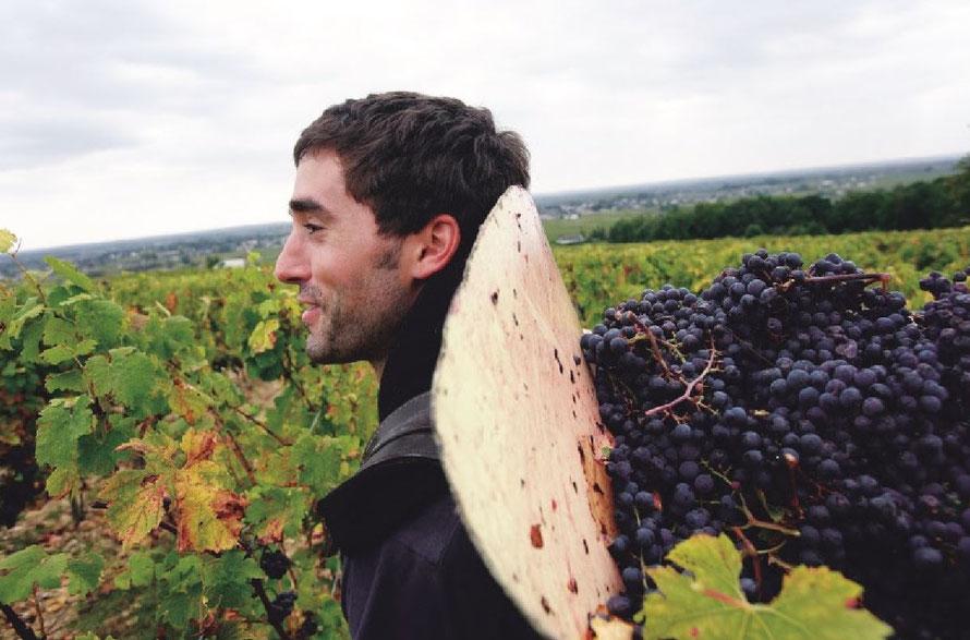 Fenomenaal jaar voor wijnboeren Val de Loire