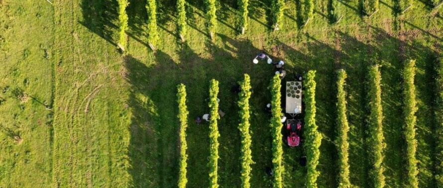 Ontdek de wijnmakers van Denemarken