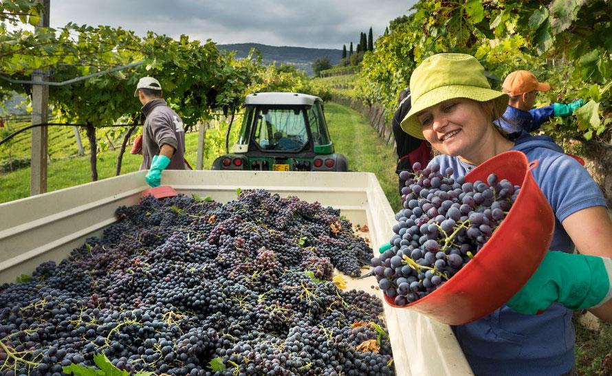 Prachtige wijnen uit Veneto