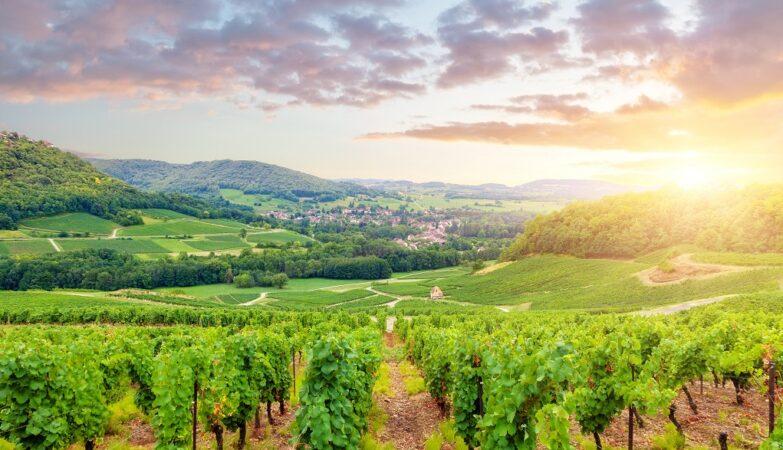 Hoe maak je een Chardonnay in de Bourgogne? Van druiven naar most