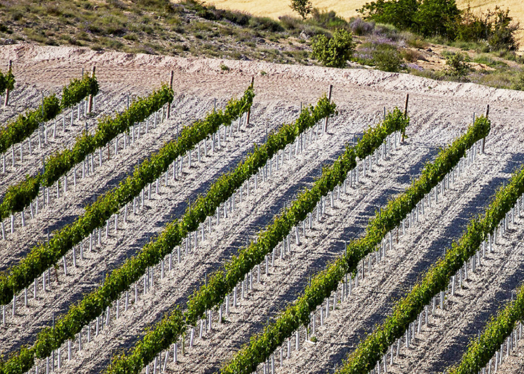 De witte kalkgronden van Ribera del Duero