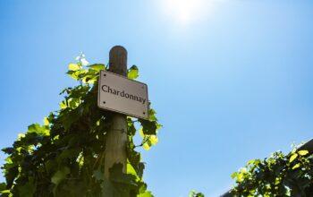 Hoe maak je een Chardonnay