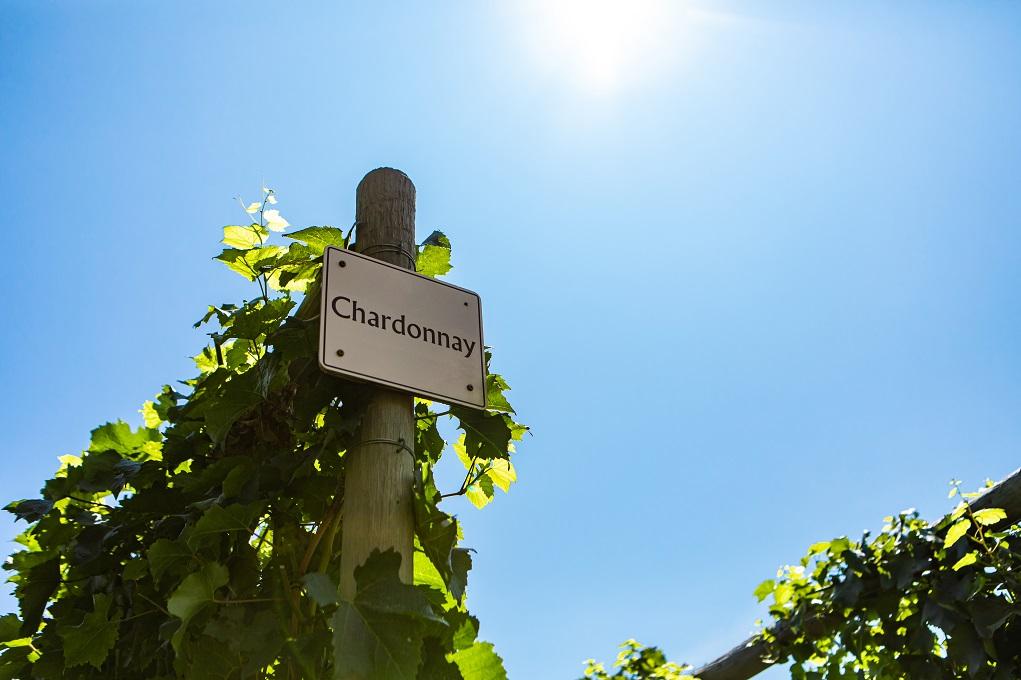 Hoe maak je een Chardonnay in de Bourgogne?