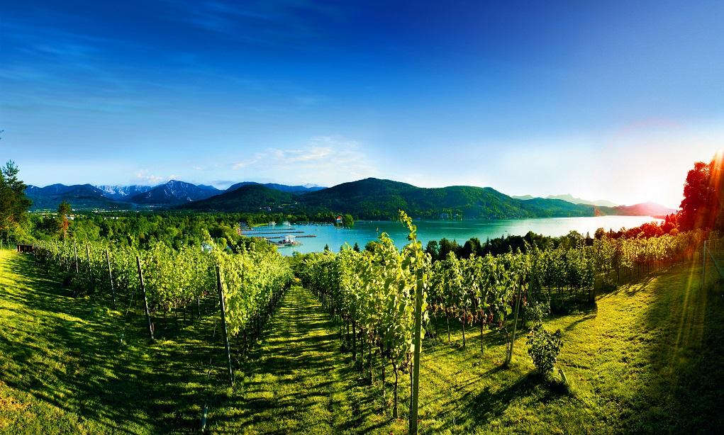 Buiten de lijntjes kleuren: biowijn in Oostenrijk