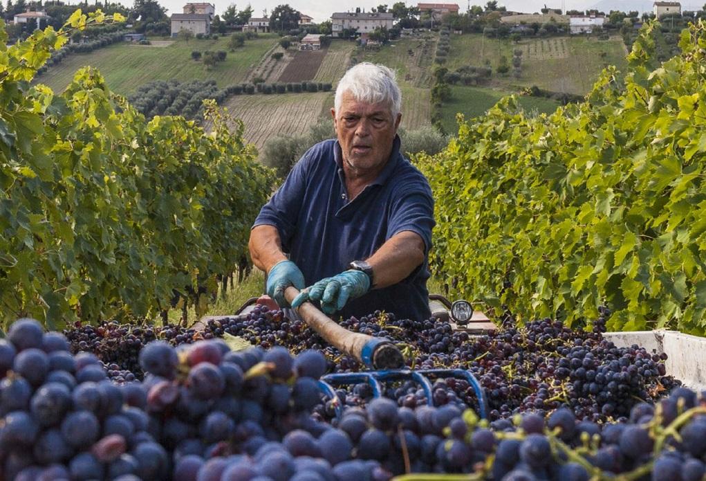 Rosso die Piemonte; Koninklijk, zelfs zonder koningspaar