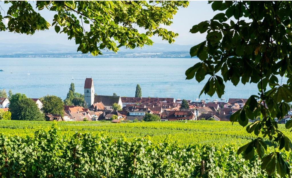 Wijnreis: Bodensee